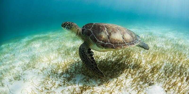 SEARM_EXT_turtle_2