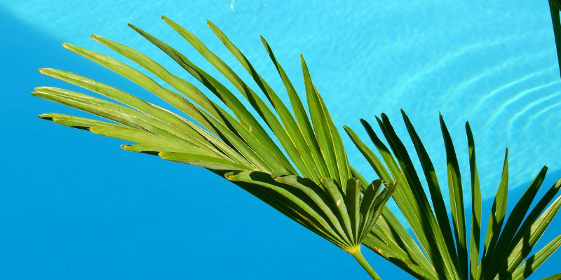 Travel blog: Top Five Eco-Friendly Resorts