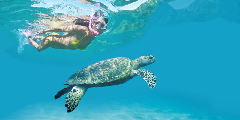 Tobago diving with turtles
