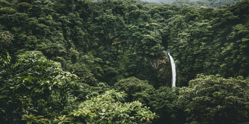 where is the oldest rainforest?