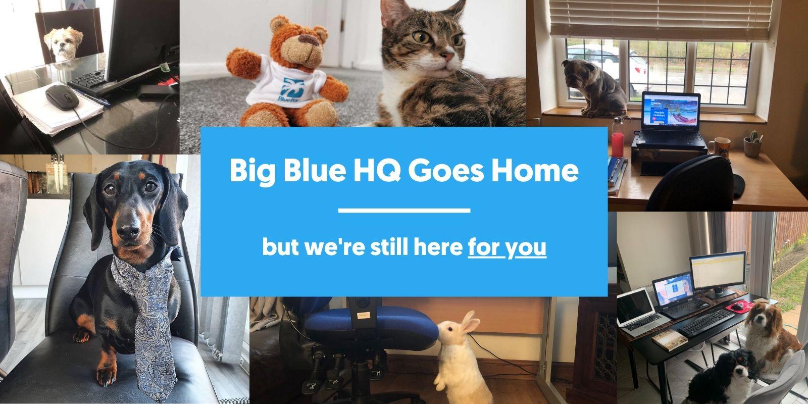 Blue Bay HQ Goes Home