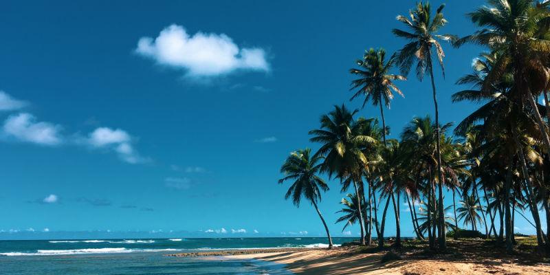 Palm-thronged beaches
