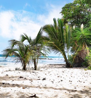 White sand beach and a palm tree in Barbados