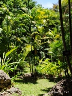 lush green forest in the Caribbean