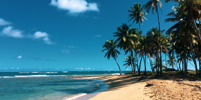 Dreamy beaches and swaying palm trees