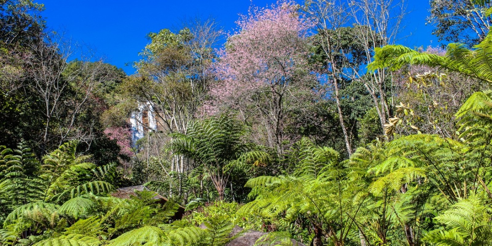 Grand Etang National Park